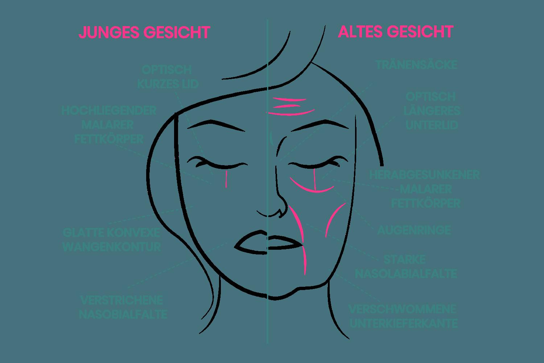 Gegenüberstellung eines jungen bzw. älteren Gesichtes
